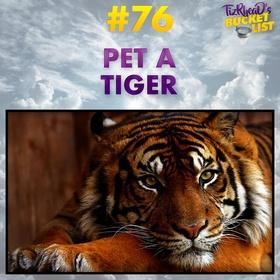 Pet a Tiger - Bucket List Ideas
