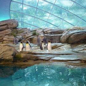 Visit 10 Zoo's from across the world - Bucket List Ideas