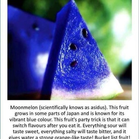 Try Moonmelon - Bucket List Ideas