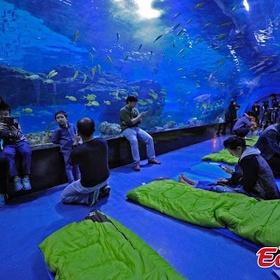 Spend a night in an aquarium - Bucket List Ideas