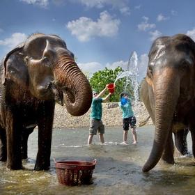 Passer du temps à l'Elephant Nature Park de Chiang Mai - Bucket List Ideas