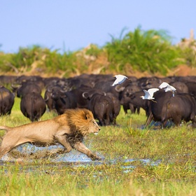 Spot wildlife in the Okavango Delta, Botswana - Bucket List Ideas