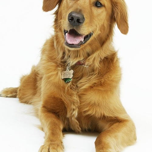 Get a Dog - Bucket List Ideas