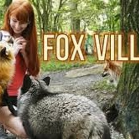 Feed the foxes at Fox Village - Bucket List Ideas