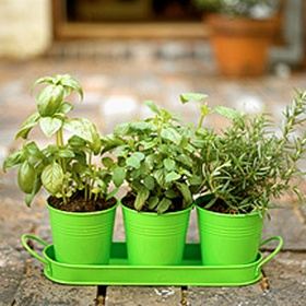 Grow my own herb garden - Bucket List Ideas