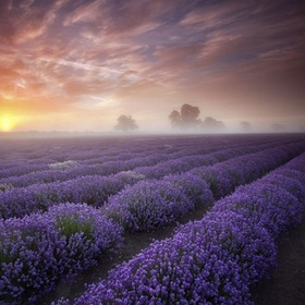 Smell the lavender fields in France - Bucket List Ideas
