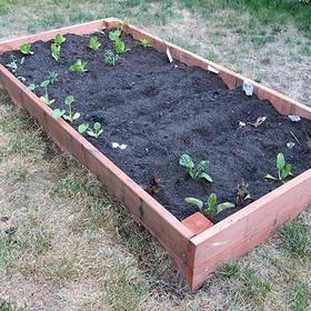 Plant a Garden - Bucket List Ideas