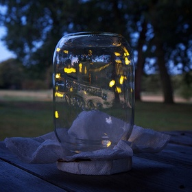 Catch Fireflies in a Jar - Bucket List Ideas