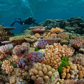 Dive at the Great Barrier Reef - Bucket List Ideas