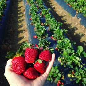 Pick my own fruit from an orchard - Bucket List Ideas