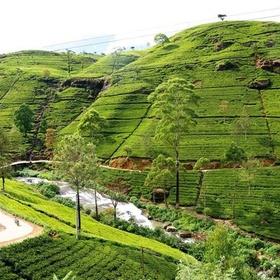 Visit Nuwara Eliya, Sri Lanka - Bucket List Ideas
