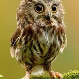 Hold a baby owl - Bucket List Ideas