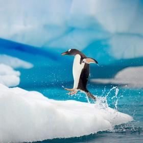 Feed penguins - Bucket List Ideas
