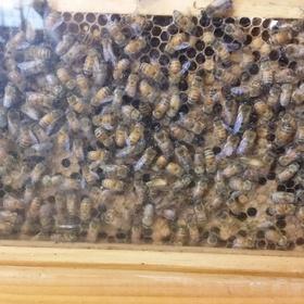 Take a course on beekeeping - Bucket List Ideas