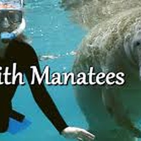 Swim with manatees in Florida | USA - Bucket List Ideas