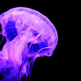 Crochet a jellyfish for Angela - Bucket List Ideas