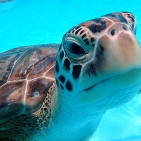 Attend a Turtle Release day - Bucket List Ideas