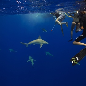 Get over my fear of sharks with the Pelagic Shark Program in Hawaii - Bucket List Ideas