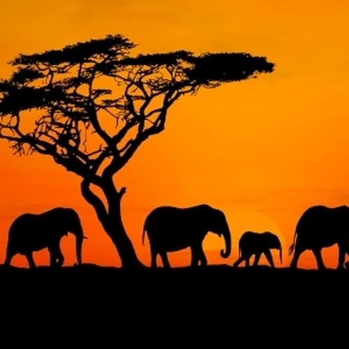 Go on a Safari - Bucket List Ideas