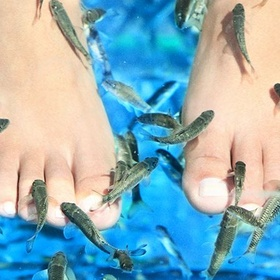 Go for a fish pedicure - Bucket List Ideas