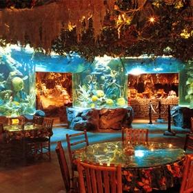 Eat dinner at the Rainforest Café in London - Bucket List Ideas