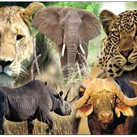 See the Big Five in Africa - Bucket List Ideas