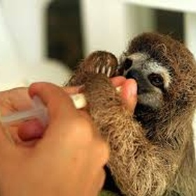 Get to care for baby sloths - Bucket List Ideas