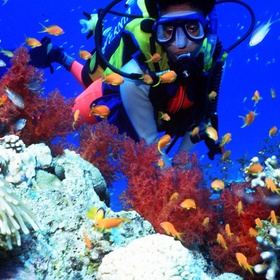 DIVE AND SEE CORAL - Bucket List Ideas