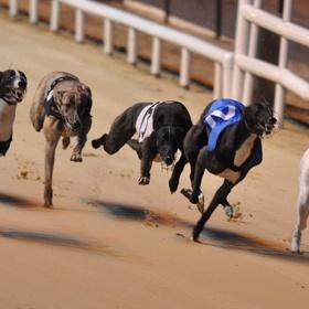 Go to a Greyhound Race - Bucket List Ideas