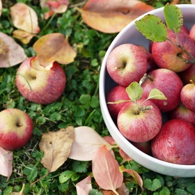 Autumn - Visit An Orchard & Pick Apples - Bucket List Ideas