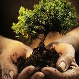 Plant a tree when i have kids and watch it grow with them🌳 - Bucket List Ideas