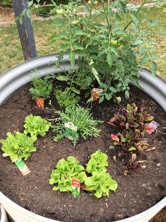 Grow my own vegetables - Bucket List Ideas
