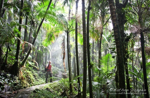 Go Hiking in a Rainforest - Bucket List Ideas