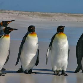 See a live penguin - Bucket List Ideas