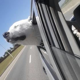 Go on a road trip across america - Bucket List Ideas