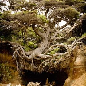 See the Tree Cave in Kalaloch, Olympic National Park, Washington - Bucket List Ideas