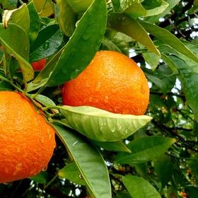 Eat an orange - Bucket List Ideas