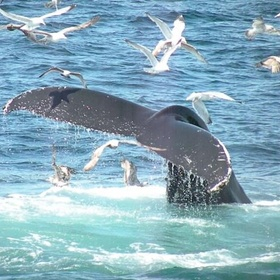 Go Whale Watching - Bucket List Ideas