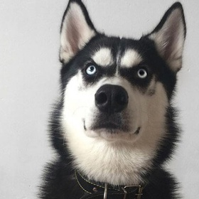 Nuôi 1 chú chó - Bucket List Ideas