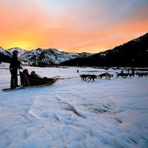 Go dog sledding - Bucket List Ideas