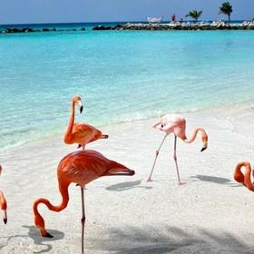 Visit Aruba - Bucket List Ideas