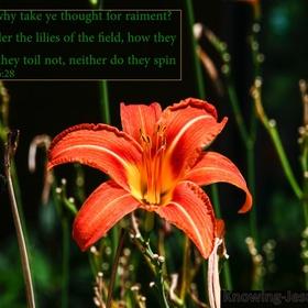 Consider the Lilies - Bucket List Ideas
