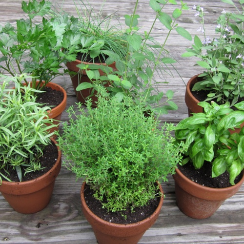 Grow an abundant herb garden - Bucket List Ideas