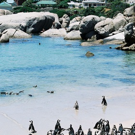 Hang out with the penguins at Boulders Beach - Bucket List Ideas