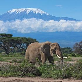 Go to Amboseli National Park - Bucket List Ideas