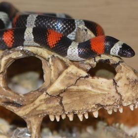 Visit the Hamm Reptile Show - Bucket List Ideas