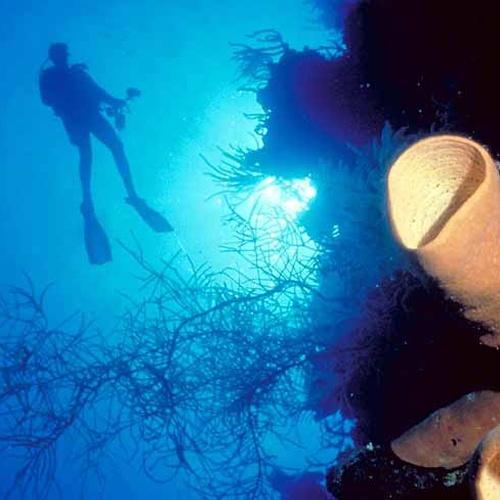 Dive the Great Blue Hole, Belize - Bucket List Ideas