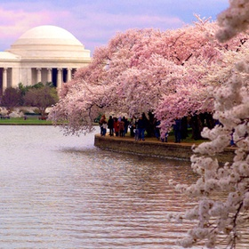 Go see the cherry blossoms in Washington DC - Bucket List Ideas