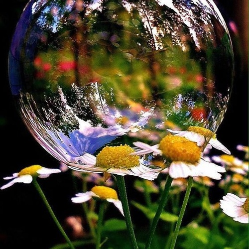 Blow Bubbles and Make Some Stunning Pictures - Bucket List Ideas
