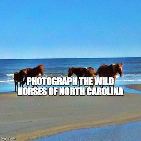 Photograph the wild horses of North Carolina - Bucket List Ideas